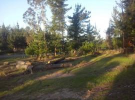 Fundo San Ricardo El Totoral