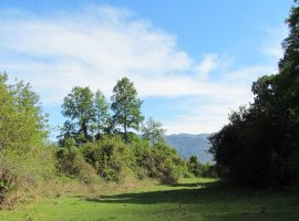 Se Venden 10 Hectáreas de Terreno en Laguna Colico Araucania