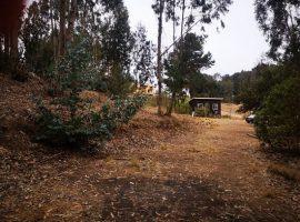 Se vende terreno con cabaña - Las Cruces